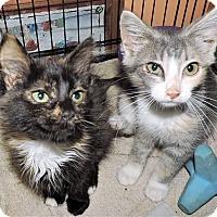 Adopt A Pet :: Nattie - Rochester, MN