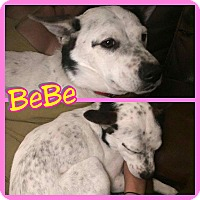 Adopt A Pet :: Bebe - Mesa, AZ
