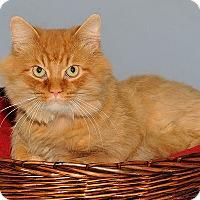 Adopt A Pet :: Robin - Gatineau, QC