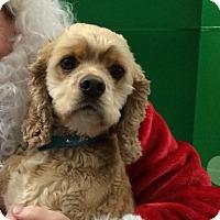 Adopt A Pet :: Lenny - Hudson, WI