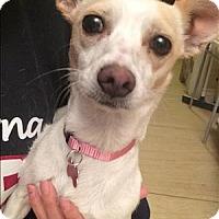 Adopt A Pet :: Sage - Encino, CA