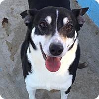 Adopt A Pet :: Parker - Joplin, MO