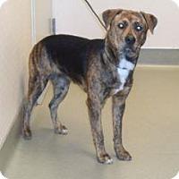 Adopt A Pet :: Arveder - Wildomar, CA