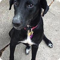 Adopt A Pet :: Twiggy - Fort Worth, TX