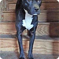 Adopt A Pet :: Buck - Coming soon! - Ascutney, VT