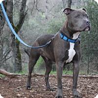 Adopt A Pet :: Brodie - Jamestown, CA