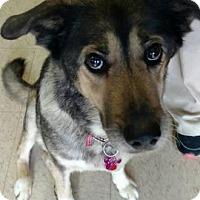 Adopt A Pet :: Lakeesha - Ashtabula, OH