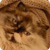 Adopt A Pet :: Pixie - Beverly Hills, CA