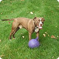 Adopt A Pet :: Courtesy Post: Gus - Woodbridge, CT