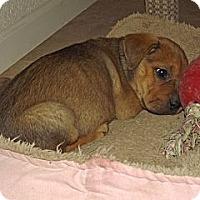 Adopt A Pet :: Cassie - Phoenix, AZ