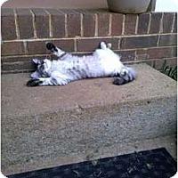 Adopt A Pet :: Tinkerbell - Murfreesboro, TN