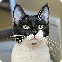 Adopt A Pet :: Laurelle - Irvine, CA