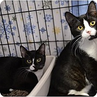 Adopt A Pet :: Inga and Katiana - Milford, MA