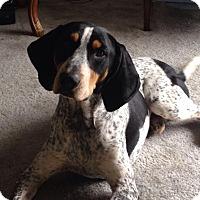 Adopt A Pet :: Lincoln - Edisto Island, SC
