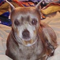 Adopt A Pet :: Heuro - Seward, AK