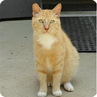 Adopt A Pet :: Cooper - Ozark, AL