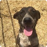 Adopt A Pet :: Momma - Choudrant, LA