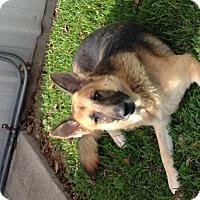Adopt A Pet :: Ralphie - Houston, TX