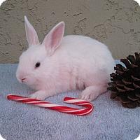 Adopt A Pet :: Crisco - Bonita, CA