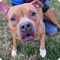 Adopt A Pet :: Nova D-67246 - Westampton, NJ