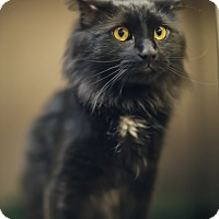 Adopt A Pet :: Papa - East Providence, RI