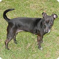 Adopt A Pet :: Ziggy - Umatilla, FL