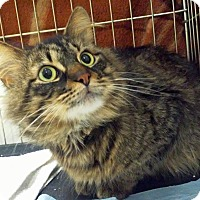 Adopt A Pet :: Angelo - Troy, MI