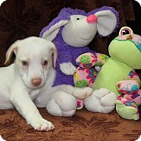 Adopt A Pet :: Kirby - Salem, NH