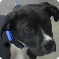 Adopt A Pet :: Hercules - Grand Saline, TX