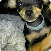 Adopt A Pet :: New Glarus - Grafton, WI