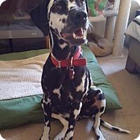 Adopt A Pet :: Dani - Turlock, CA
