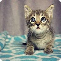 Adopt A Pet :: *BREWSTER - Sugar Land, TX