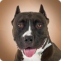 Adopt A Pet :: Dallas - Prescott, AZ