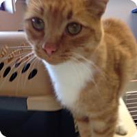 Adopt A Pet :: Mufasa - Idaho Falls, ID