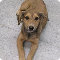 Adopt A Pet :: Bella - Warrenton, NC