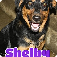 Adopt A Pet :: Shelby - Lawrenceburg, KY