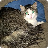 Adopt A Pet :: Roamie - Monroe, GA