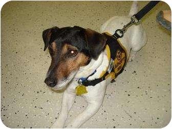 Jack Russell Terrier Dog for adoption in Omaha, Nebraska - Rexx