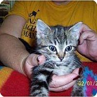 Adopt A Pet :: Spunky - Island Park, NY