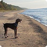 Adopt A Pet :: Rocky - Allegan, MI