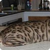 Adopt A Pet :: Stalker - Davis, CA