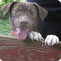 Adopt A Pet :: Wile E. - Covington, KY