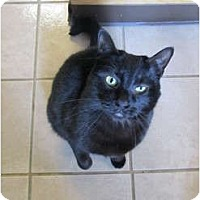 Adopt A Pet :: Nikko - Pascoag, RI