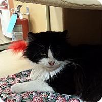 Adopt A Pet :: Felix - Frederick, MD