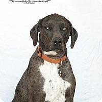 Adopt A Pet :: Jasper R Hall - Sweetwater, TN