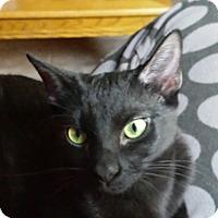 Adopt A Pet :: Elvira - Mesa, AZ
