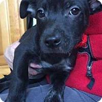 Adopt A Pet :: Boy Wonder - Sudbury, MA