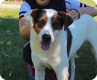 Collie Mix Dog for adoption in Dickson, Tennessee - Michael