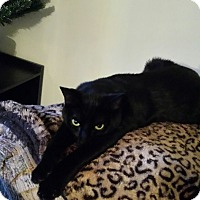 Adopt A Pet :: Cooley_Courtesy Post - Columbia, MD