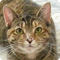 Adopt A Pet :: Blanton - Covington, KY